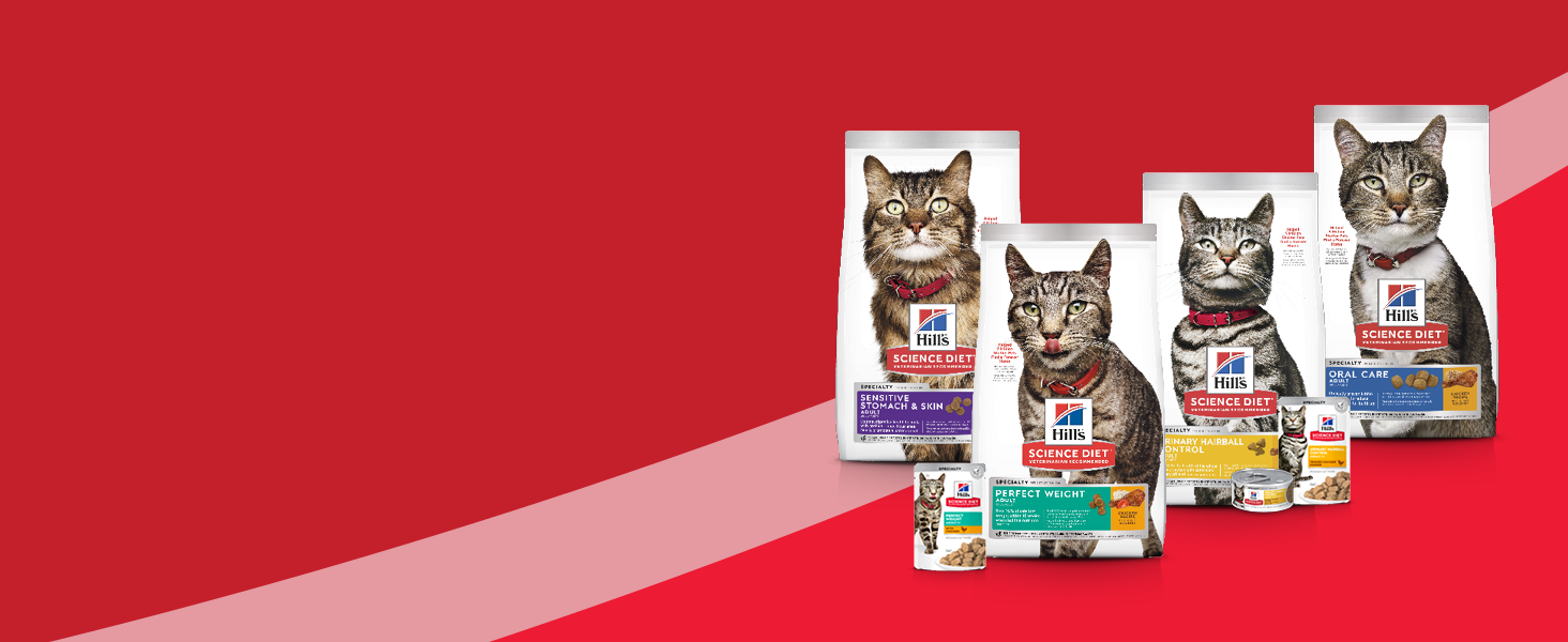 cat food, healthy cat food, dry cat food, hills, adult cat food, tasty cat food