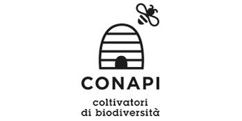 コナピ新ロゴ