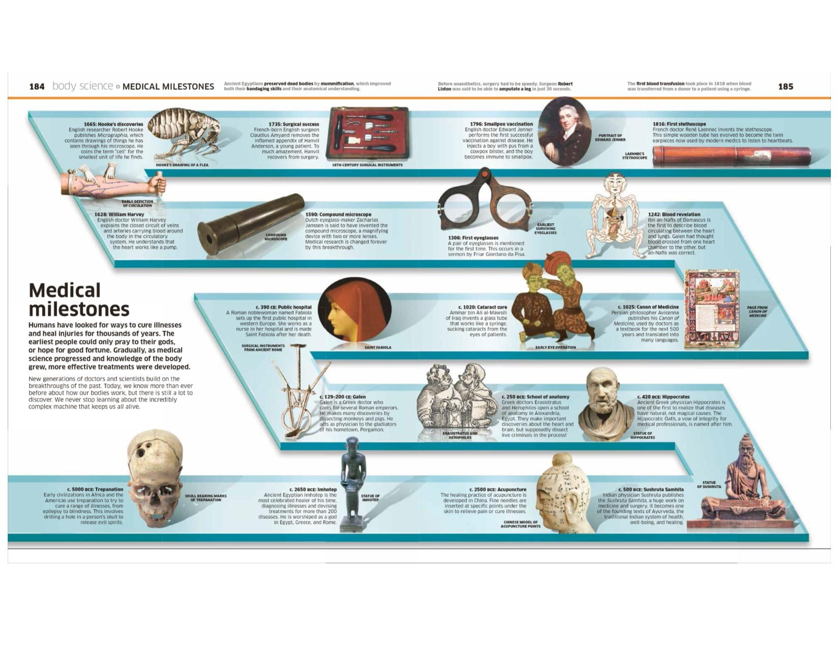 Human Body! (Knowledge Encyclopedias): DK: 9781465462398: Amazon.com ...