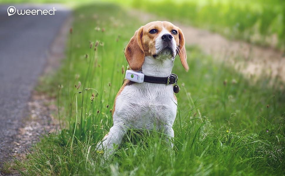 collare gps cane,gps per cani,gps cani,gps cane,localizzatore gps per cani,collare gps per cani