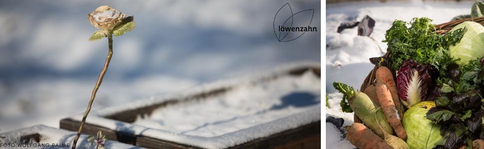 Frisches Gemuse Im Winter Ernten Die Besten Sorten Und