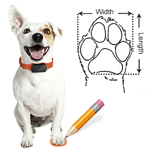 Measuring Your Dog for a Perfect Fit