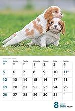 カレンダー2018 Dogs ドッグス (ヤマケイカレンダー2018) カレンダー 増田 勝正[Amazon]