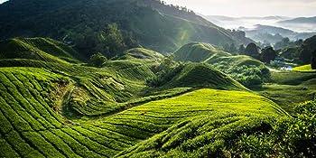 hot tea, black tea, organic tea, loose tea, tea leaves, green tea, silk tea bags