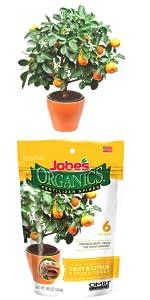 Jobe's Organic Fruit Citrus Tree Fertilizer Spikes Container