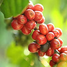100% Sustainable Coffee Beans.
