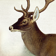 Deer illustration that shows how EPIC venison meat bars are made from 100% grass fed deer.