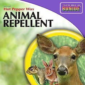 bonide hot pepper wax