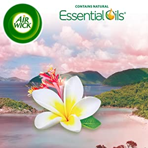 Amazon.com: Air Wick Scented Oil 3 Refills, Virgin Islands ...