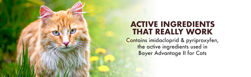 cat, active, bayer, advantage