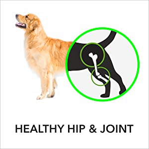 absolute,absolute dog supplement,mobility,mobility supplement
