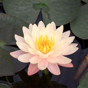 mindfulness, meditation, self help books for women, inspirational books, spiritual books
