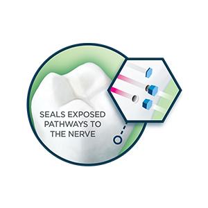 seals exposed pathways nerve