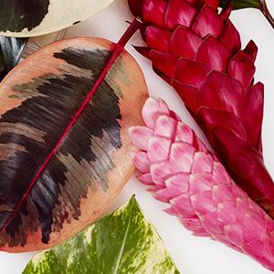 lotion cream moisturizer shea butter aloe Hibiscus avocado mango olive oil tropical perfume ocean