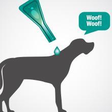 Amazon Large Dog Flea And Tick Treatment