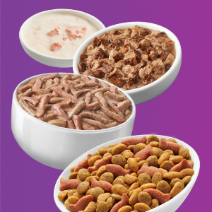 Bowls of Friskies dry, wet and pate cat food varieties