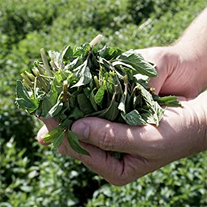 Stash tea,herbal tea,black tea,green tea,tea sampler,organic tea,assorted tea,soothing,peppermint