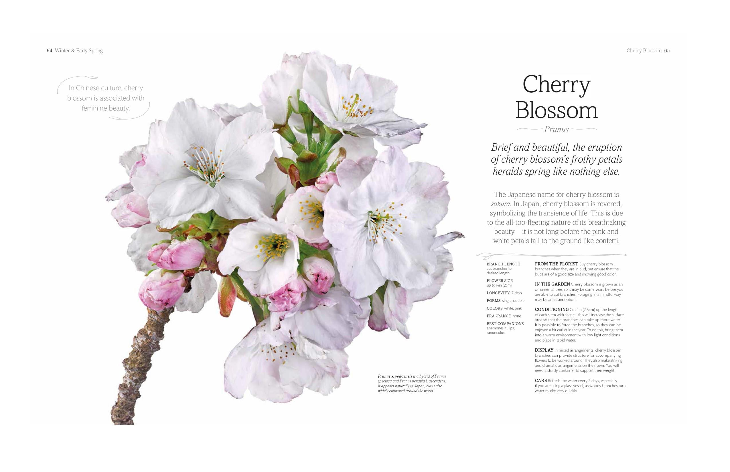 The flower book rachel siegfried 9781465445483 amazon books view larger izmirmasajfo