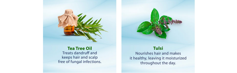 tea tree oil; tulsi; hair scalp; fungal free hair;