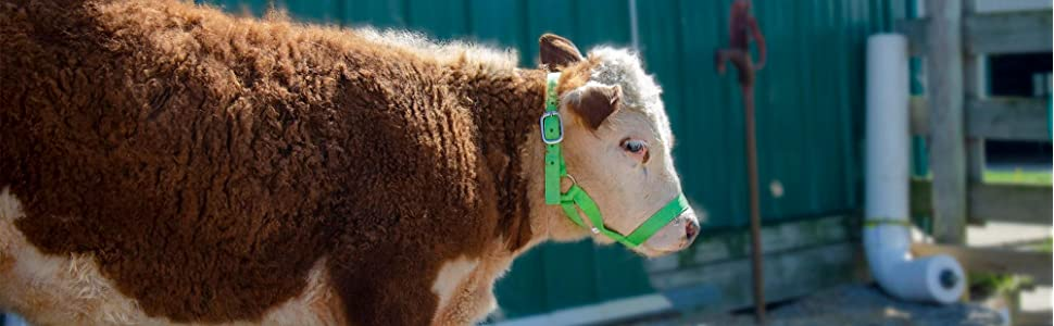 Multiple Colors Derby Originals Adjustable Nylon Livestock and Cattle Halters with New and Improved Sizing