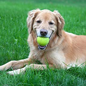 Amazon.com : Chew King Fetch Balls Extremely Durable