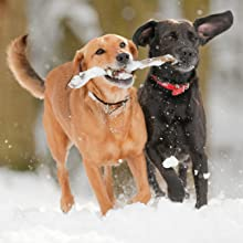 senior dog food to support healthy joints