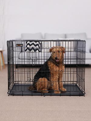 Dos mascotas muy traviesas, adoptadas en un nuevo hogar, Songmics, una compañía llena de vida y con montones de cosas divertidas para mascotas.