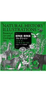 動物 イラスト パブリックドメイン 植物画 デザイン キノコ シダ 海洋植物 海洋動物 AMIMAL