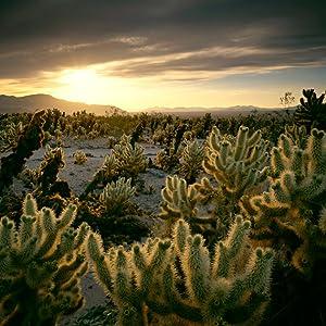 photograph your trip cactus