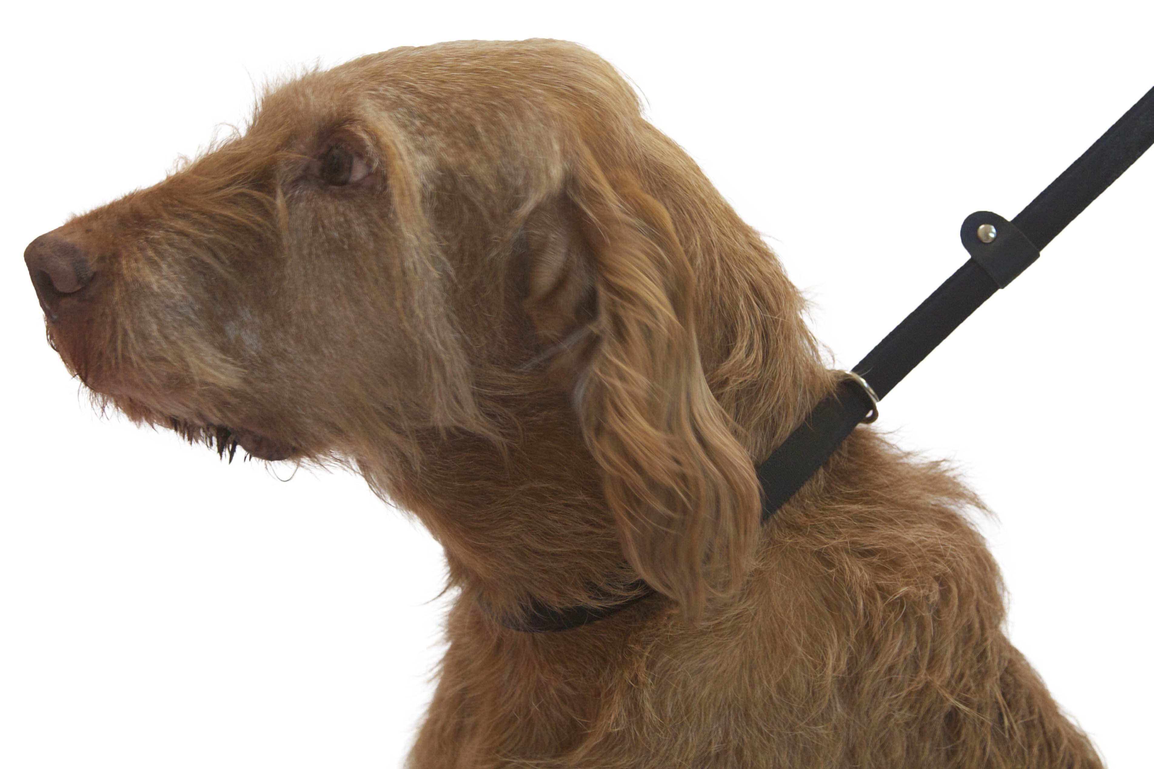 Dog E Collar Training Guide