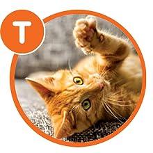 Temperament, Cat Behavior, Iams Dry Cat Food, Playful Cat, Shy Cat, Cat Anxiety, Food for Cats