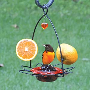 Birds Choice Oriole Jelly Feeder