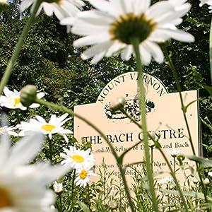 Centre-bach