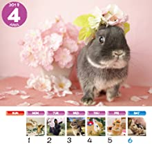 うさぎと暮らす うさぎと暮らす壁掛けカレンダー かわいい動物カレンダー ペットカレンダー