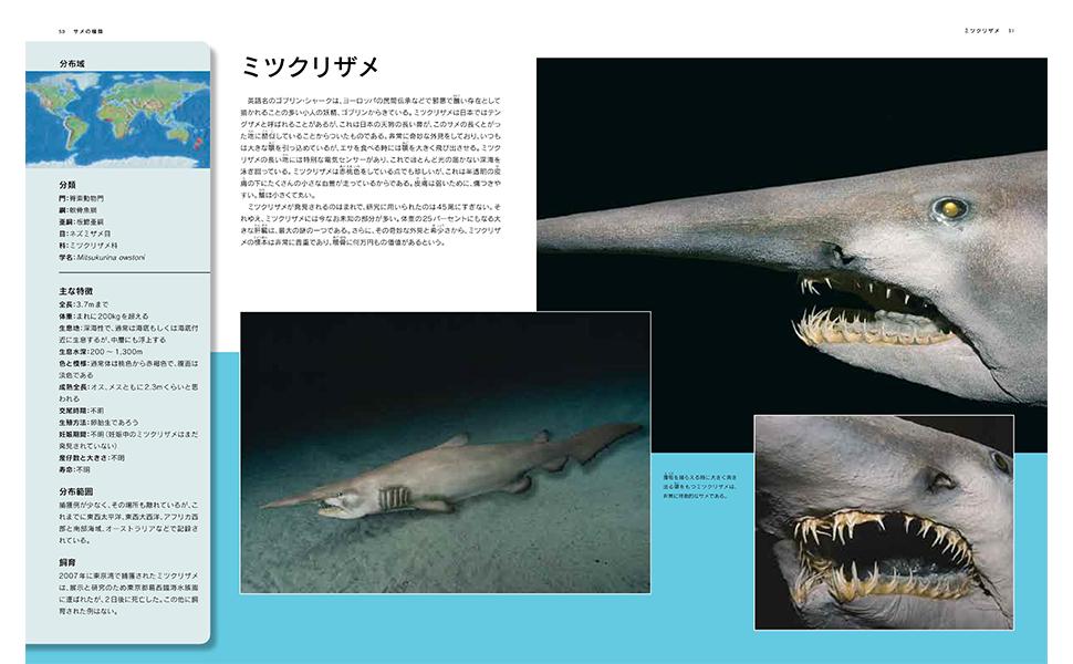 サメ図鑑2