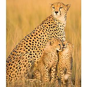 giraffe sanctuary, secret travel spots, travel guide africa, travel guide europe, travel guide usa