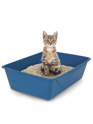 petmate giant litter pan, big litter boxes for cats, jumbo litter pan, litter box extra large,