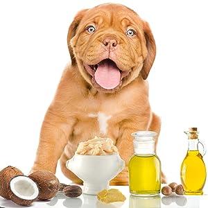 The Blissful Dog Dogue De Bordeaux Nose Butter – Dog Nose Butter, 2 Ounce