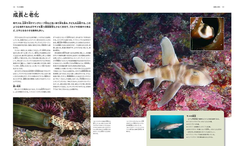 サメ図鑑4