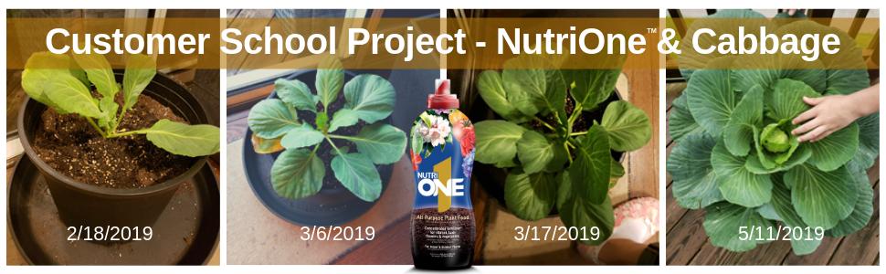 nutrione nutri one nutri1 all purpose fertilizer plant food nutrients edible vegetables cabbage