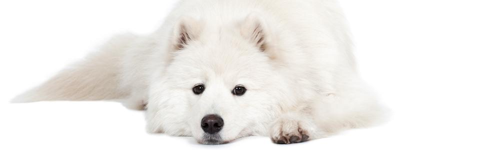 Amazon Com The Blissful Dog Samoyed Nose Butter 0 50 Ounce Pet
