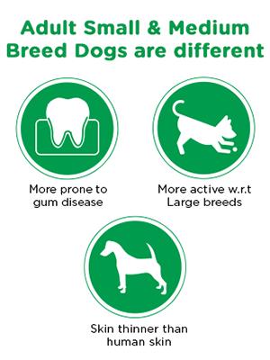 Small & Medium Breed Dog needs are different