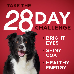 Take the Twenty Eight Day Challenge for bright eyes, a shiny coat and healthy energy