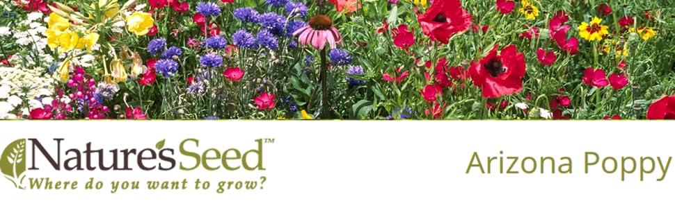 Amazon com : Nature's Seed Arizona Poppy Seeds (5 Pack