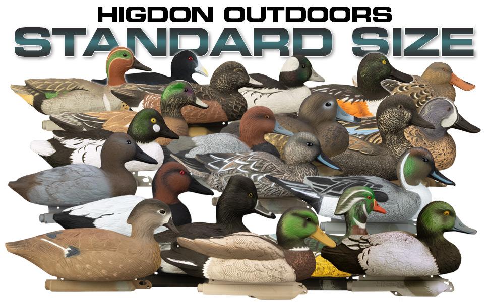 mallard pintail green blue wing wood duck ringneck canvasback redhead gadwall widgeon bufflehead