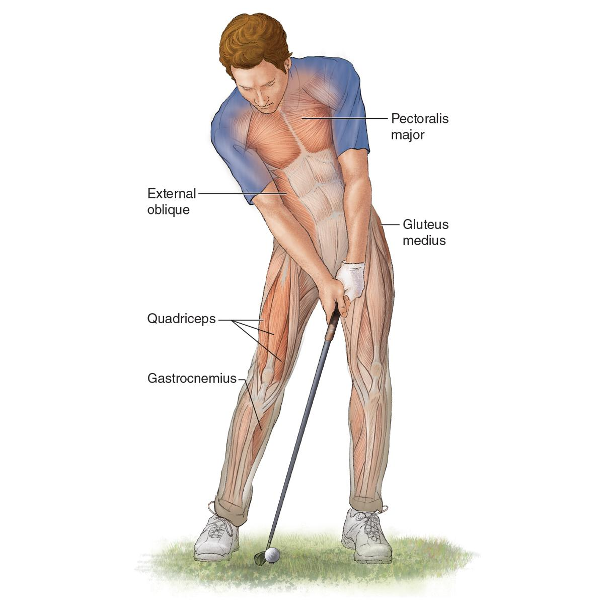 Golf Anatomy 2nd Edition: Craig Davies, Vince DiSaia: 9781492548423 ...