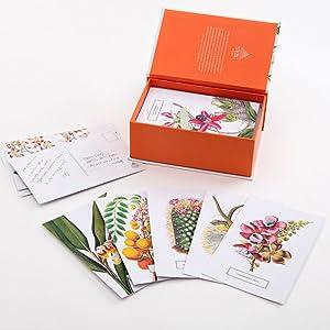 Botanicals, New York Botanical Gardens, postcards, postcard collection, new york postcards