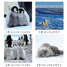 写真の動物名もしっかり掲載。北極・南極の大自然に生きる動物を学習できます。