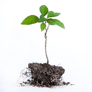 ecologia; sostenibilidad; eucalyptus