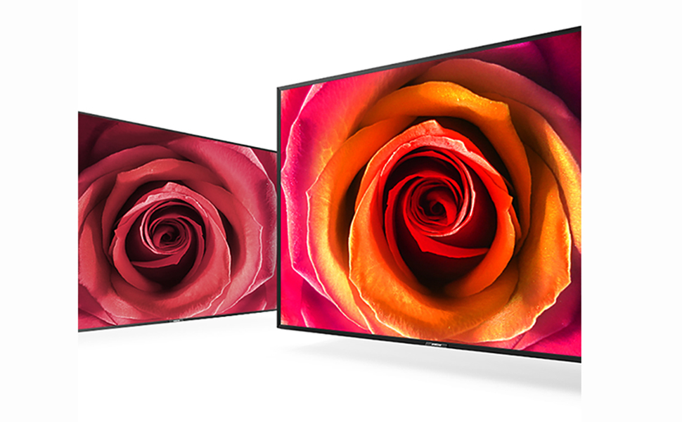 Close-up of a colorful rose on the TV screen